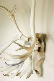 Home Decor Antlers 8 Best Deer Skull Designs Images On Pinterest Deer Skulls Skull