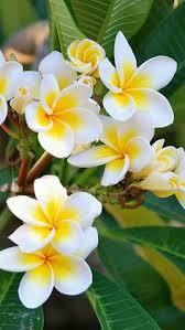 Flower Image Gorgeous Flower Gardening Pinterest Flower Photography