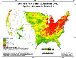 emerald ash borer map fhtet products agrilus planipennis risk map
