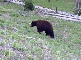 Utah Wildlife Tours images Wild west tour utah idaho montana wyoming adventure moto jpg