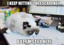 Work Memes - top 30 best hilarious work memes moodysoody