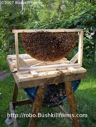 How To Build Top Bar Hive 55 Gallon Top Bar Barrel Bee Hive 56 Steps With Pictures