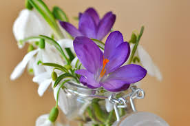 free images blossom white purple petal bloom close flora