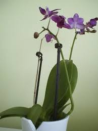Orchids Care How To Care For Mini Orchids With Pictures Wikihow