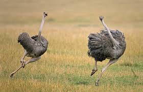 11 pic ostrich infowpb com