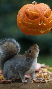 now that u0027s a horror tail squirrels go nuts for halloween with