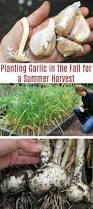 25 trending fall planting vegetables ideas on pinterest winter