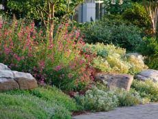 the best plants for rock gardens plants for rocky soil hgtv