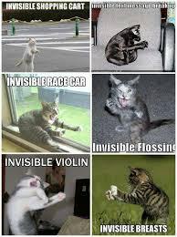 Invisible Cat Memes - invisible cat memes 28 images random invisible cat stuff
