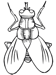 insect coloring pages itgod me