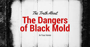 White Mold In Basement Dangerous by The Truth Behind The Dangers Of Black Mold In Your Home Maine