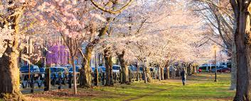 blossom trees connecticut u0027s spring blossom finder visit ct
