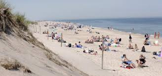 plays on cape cod bloody shark attack closes cape cod beach ny daily news