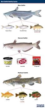 what is the best thing to use to clean wood cabinets best thing to use for catfish bait 74 buy