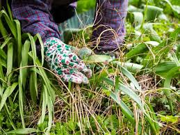 what to do in the garden in november care2 healthy living