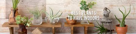 best plants to have indoors rc willey blog