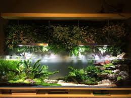 811 best ripariumy polyudariumy images on pinterest aquariums