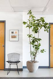 how to style and care for indoor plants small ornamental trees