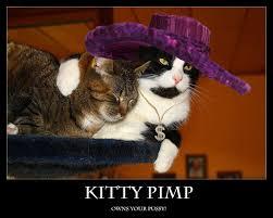 Pimp Meme - demotivational kitty pimp by kundendienst on deviantart
