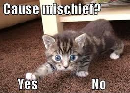 Cute Cats Memes - 20 cute cat memes that will put you in a good mood sayingimages com