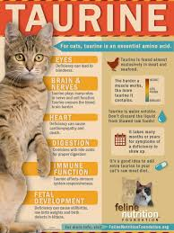 no bull taurine is a must for kitty feline nutrition foundation