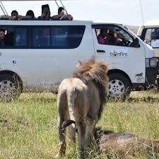 safari 3 days masai mara wildebeest migration packages bonfire