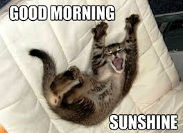 Good Morning Cat Meme - 50 funny good morning wishes