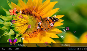 sunflower wallpapers sunflower live wallpapers app ranking and store data app annie