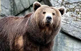 hunt bears safely captain hunter