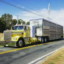 Kenworth Custom W900a Bull Hauler Semi Crazy Pinterest Rigs