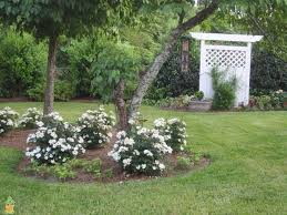 Backyard Garden Ideas Photos Best 25 Double Knockout Roses Ideas On Pinterest Knockout Roses