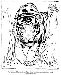 zoo animal coloring sheets pictures