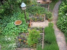 beauty butterfly butterfly garden plans