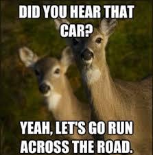 Oh Deer Meme - deer hunting meme funny deer pictures funny deer hunting pics