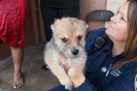 the shelter dallas animal services partners for u201cclear the shelter u201d campaign