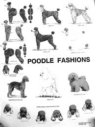 i never did any of these looks on my poodle we just clipped his