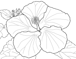 spring flowers coloring page beautiful blossoms