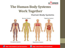 Human Anatomy And Body Systems Human Body System Pharmaceutical Sales