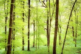 bright green forest in with beautiful soft light photograph
