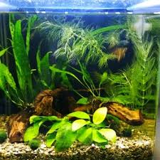 Aquascape Malaysia Aquascapes 28 Photos U0026 15 Reviews Home Decor 1150 N Nimitz