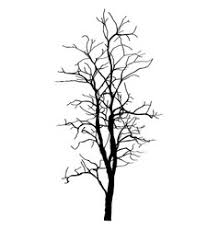 tree without u0026 leaves vector images over 130