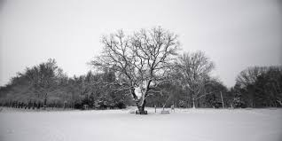 free stock photo of alone black and white branch