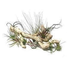 Medusa Planter Succulent Gift Aeonium Kiwi Selfie Vase Succulents Plants Gift