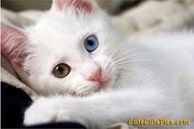 48 kittens giving kitty cat eyes