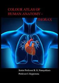 Anatomy Of Human Heart Pdf Heart Sobotta Atlas Of Human Anatomy Coração Pinterest