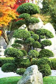 large bonsai tree with rock and waterfall in a japanese garden