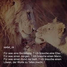 sprüche löwe zitate und sprüche sedat ck instagram photos and