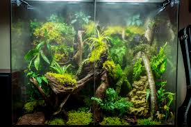 flickr photos tagged rainforestvivarium picssr
