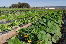 farm to fable san diego magazine july 2015 san diego california