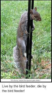 Dead Squirrel Meme - it s funny cause the squirrel gets dead live by the bird feeder